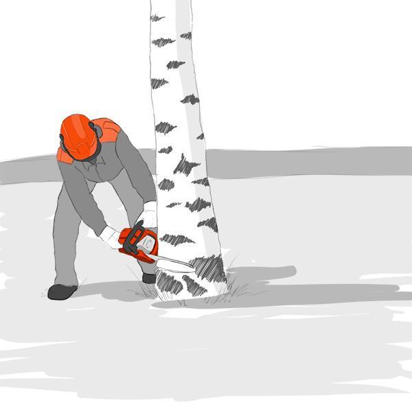 Puunkaatoapu on maksutonta eikä sisällä puun kaatamista.